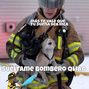 Nuestra misión, salvar vidas, gatos y bienes.